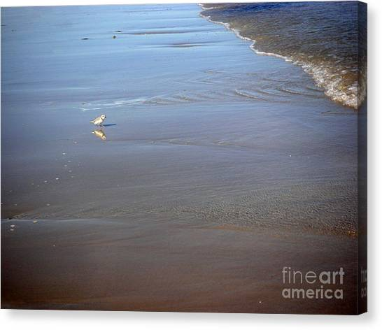 Being One With The Gulf - Cautious Canvas Print by Lucyna A M Green