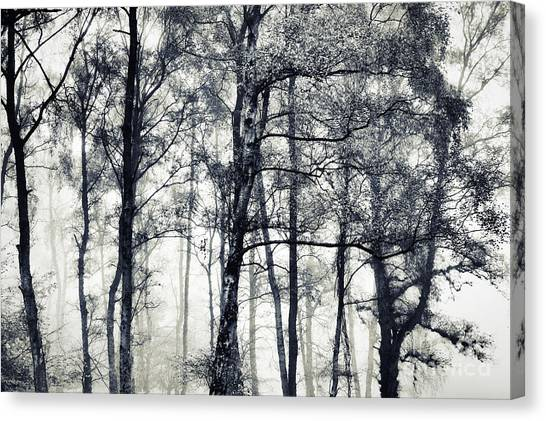Silver Leaf Canvas Print - Beithe by Tim Gainey