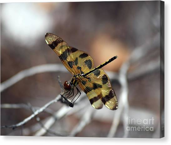 Bejeweled Wings Canvas Print