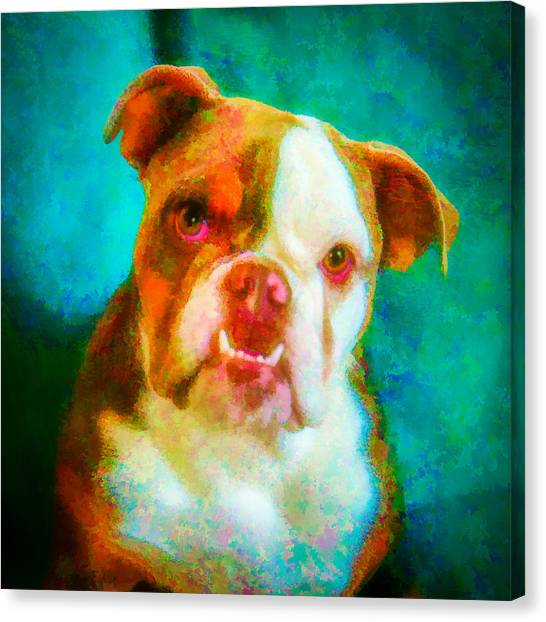 Bella 1 Canvas Print