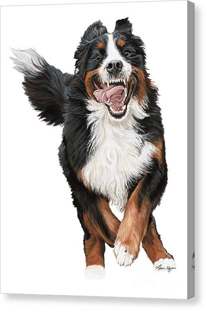 Bernese Mountain Dogs Canvas Print - Bella by Liane Weyers