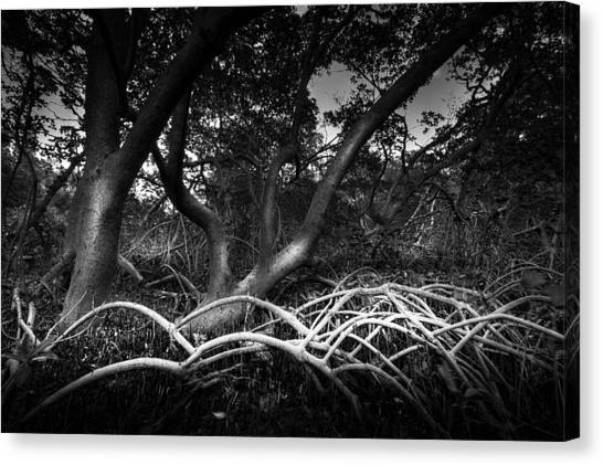 Mangrove Trees Canvas Print - Below The Canopy by Marvin Spates