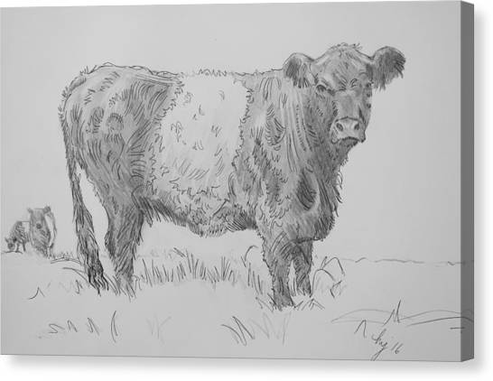 Belted Galloway Cow Pencil Drawing Canvas Print