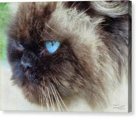 Himalayan Cats Canvas Print - BEN by Theresa Campbell