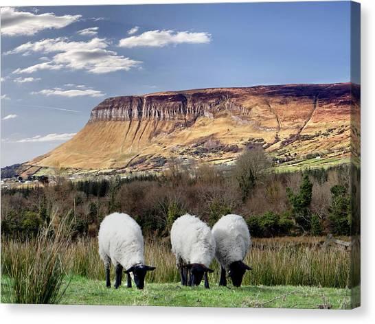 Benbulben, Co. Sligo - Sheep Grazing At The Base Of The Mountain On A Sunny Spring Day Canvas Print