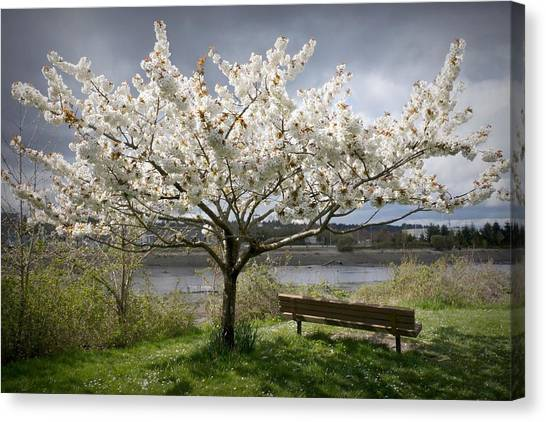 Bench And Blossoms Canvas Print
