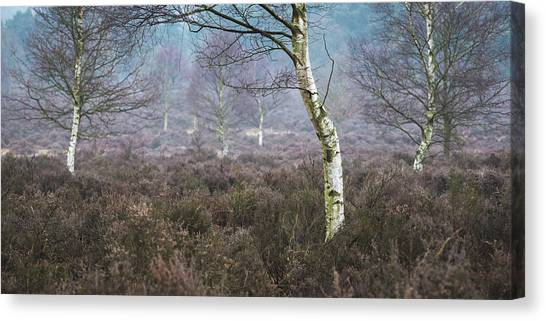 Sherwood Forest Canvas Print - Bend by Chris Dale