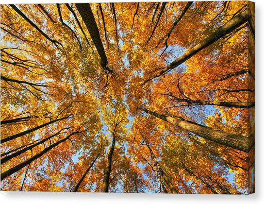 Beneath The Canopy Canvas Print