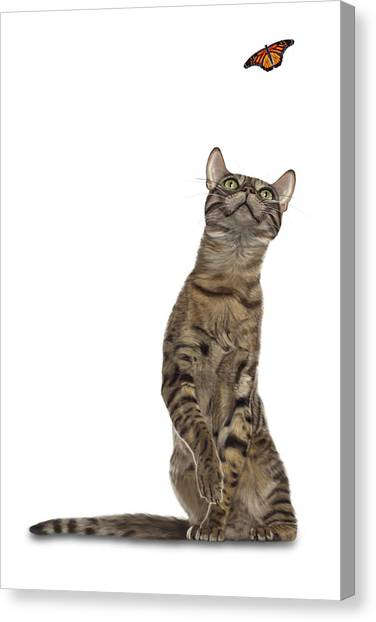 Bengal Cat With Butterfly Canvas Print