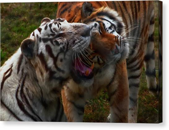 Canvas Print featuring the photograph Bengal Tiger And White Bengal Tiger by Chris Flees