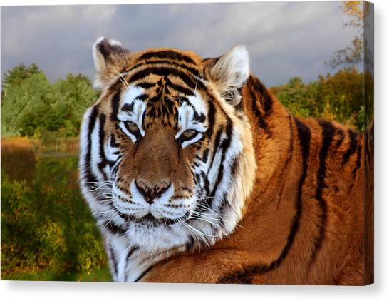 Bengal Tiger Portrait Canvas Print