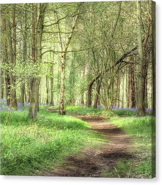 Landscapes Canvas Print - Bentley Woods, Warwickshire #landscape by John Edwards