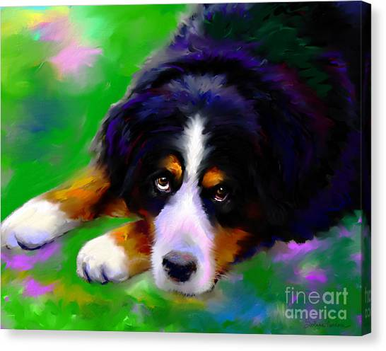 Bernese Mountain Dogs Canvas Print - Bernese Mountain Dog Portrait Print by Svetlana Novikova