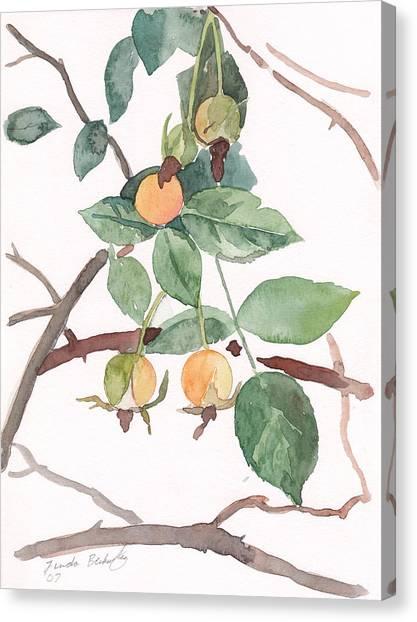 Berries In Pink Light Canvas Print by Linda Berkowitz