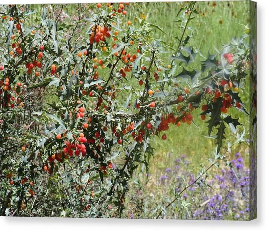 Berries On The Vine Canvas Print