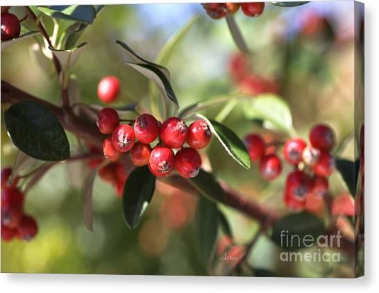 Berry Delight Canvas Print
