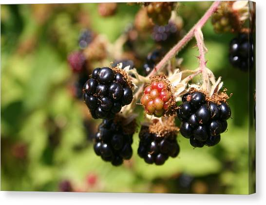 Wild Berries Canvas Print - Berry Fresh by Dylan Punke