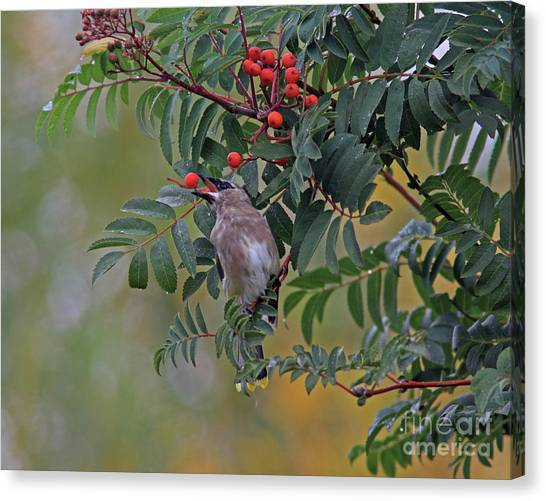 Canvas Print - Berry Picking by Gary Wing