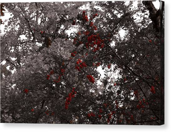 Berry Trees Canvas Print by Bill Ades