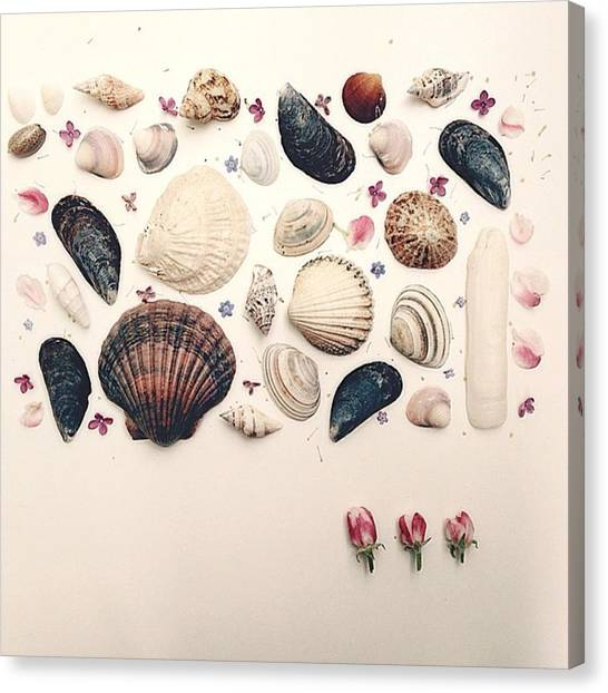 Oysters Canvas Print - Best Barry White Voice This Morning... by Naomi Ostroumoff