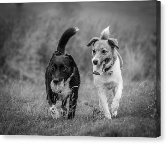 Canvas Print featuring the photograph Best Buddies by Nick Bywater