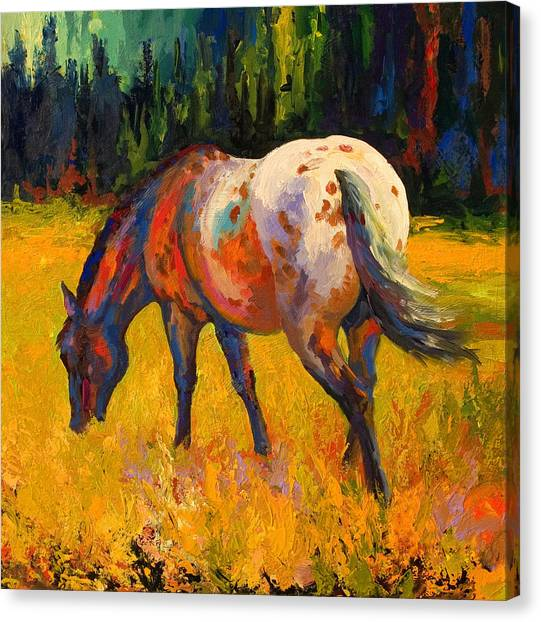 Equine Canvas Print - Best End Of An Appy by Marion Rose