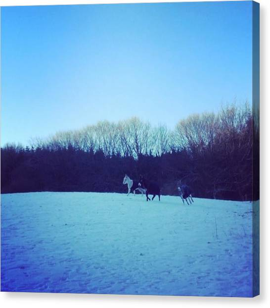 Donkeys Canvas Print - 🐴🐴🐴❄️❄️best Way Too by Fields Of Freedom