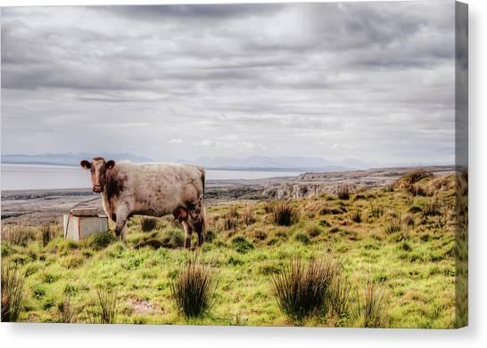 Besty My Irish Cow Canvas Print