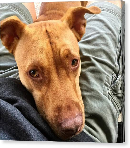 Dog Canvas Print - Between My Legs, #juansilvaphotos by Juan Silva