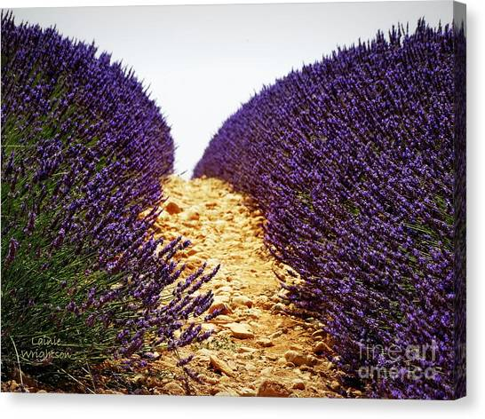 Between The Purple Canvas Print
