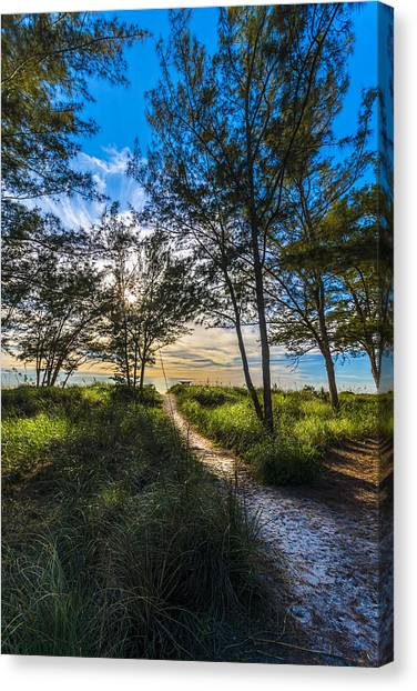 Mangrove Trees Canvas Print - Beyond The Green Grass by Marvin Spates