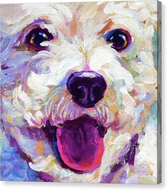 Bichon Frise Face Canvas Print