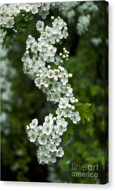 Bidwell Park Bouquet Canvas Print by Richard Verkuyl