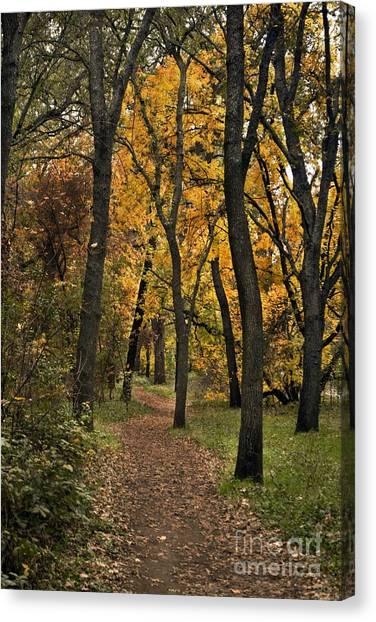 Bidwell Park Fall Canvas Print by Richard Verkuyl
