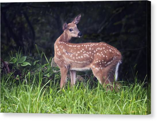 Big Bambi Canvas Print