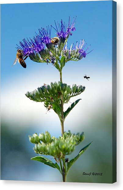 Big Bees Little Bee Canvas Print