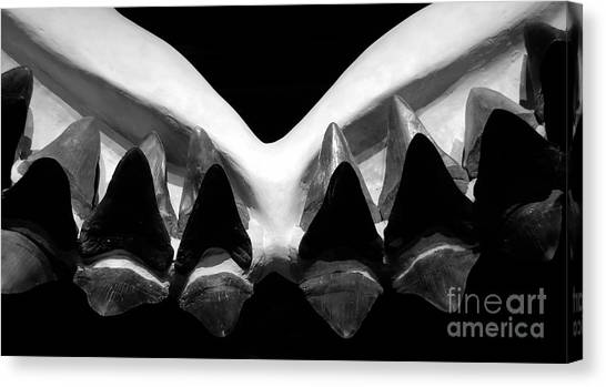 Shark Teeth Canvas Print - Big Bite by David Lee Thompson