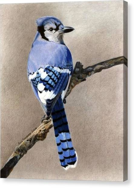 Big Blue Jay Canvas Print