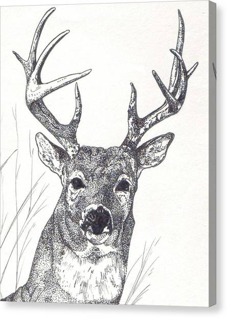 Big Buck Canvas Print by Debra Sandstrom