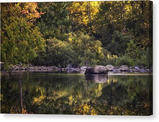 Big Bull In Buffalo National River Fall Color Canvas Print