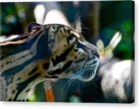 Big Cat Canvas Print by Gene Sizemore