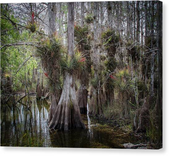 Big Cypress Preserve Canvas Print