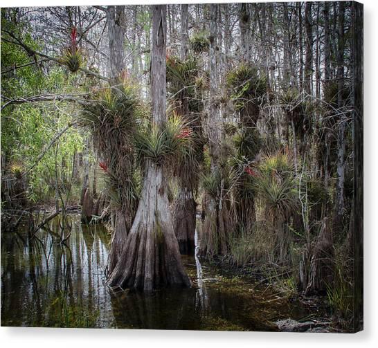 Big Cypress Preserve Canvas Print