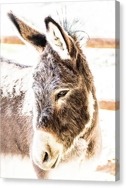 Big Ears Canvas Print