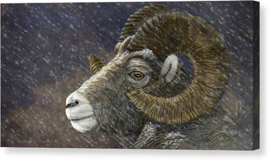 Big Horn In Snowstorm Canvas Print