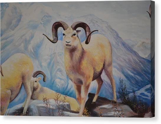 Canvas Print - Big Horn Sheep  by Anne-elizabeth Whiteway