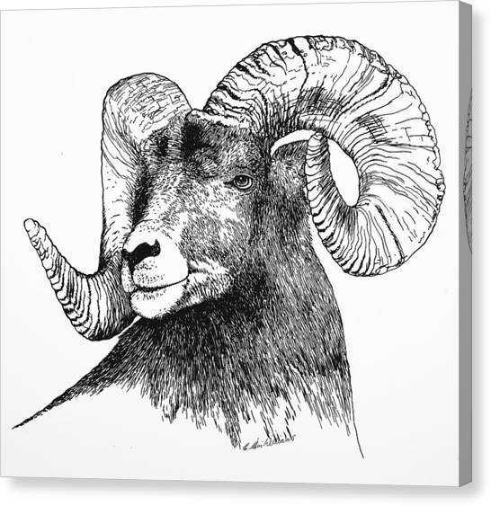 Big Horned Sheep Canvas Print