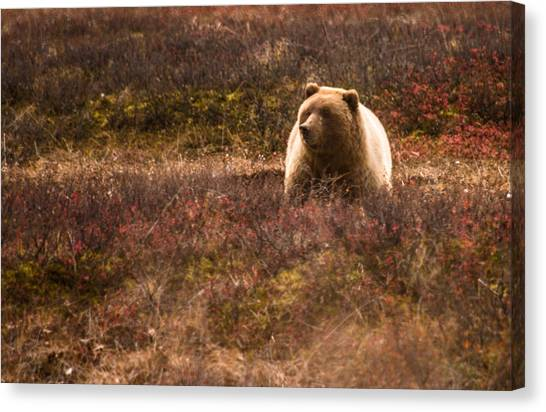Wild Berries Canvas Print - Big Hungry Grizzly by Jeff Folger