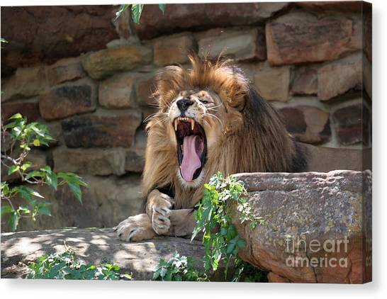 Canvas Print - Big Mouth by Jeannie Burleson