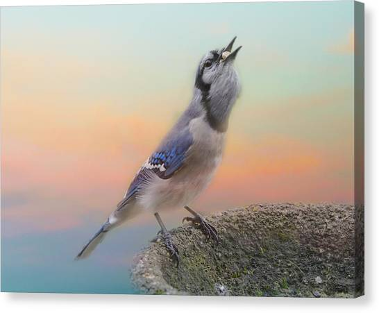 Bluejays Canvas Print - Big Mouthful by Susan Capuano